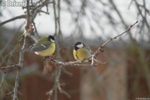 Bohatstvo vtáčej reči