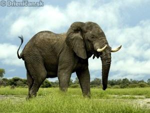 Panapattský slon darebák