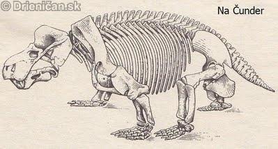 Kostra kannemeyeie,triasového dicynodonta,ktorý dosahoval veľkosť býka.
