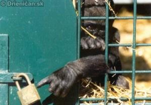 Zvieratá v zajatí